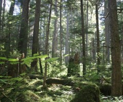 Tongass National Forest, Juneau, Alaska